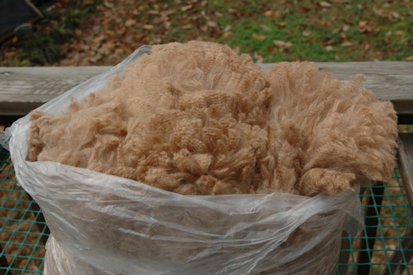 raw unwashed alpaca fleece